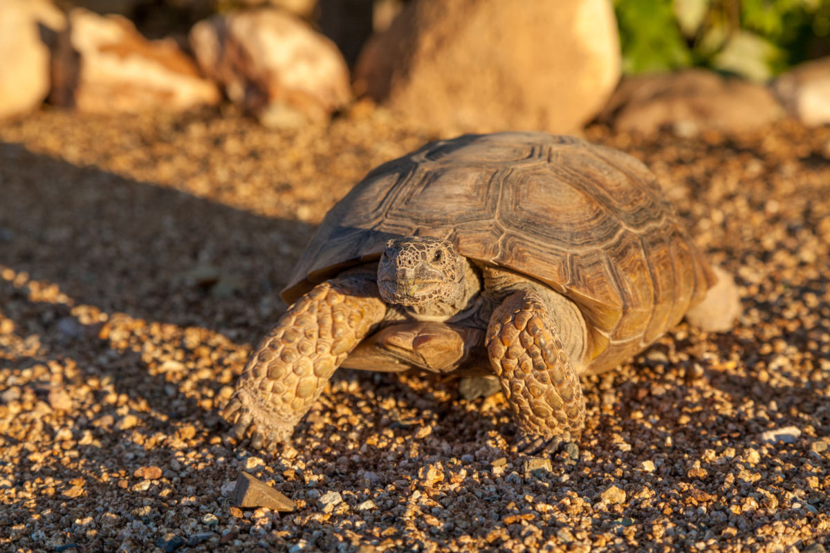 Community Connection | Phoenix Herpetological Society