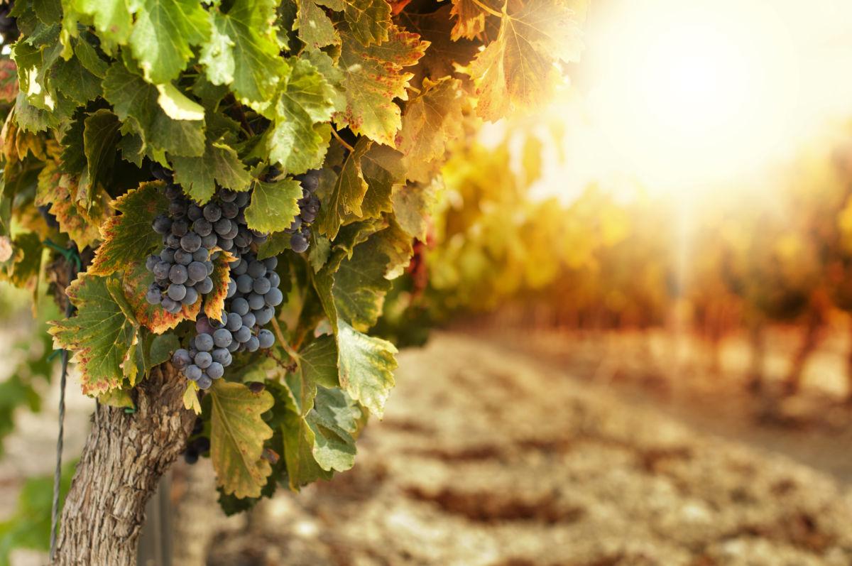 Arizona Wine Country