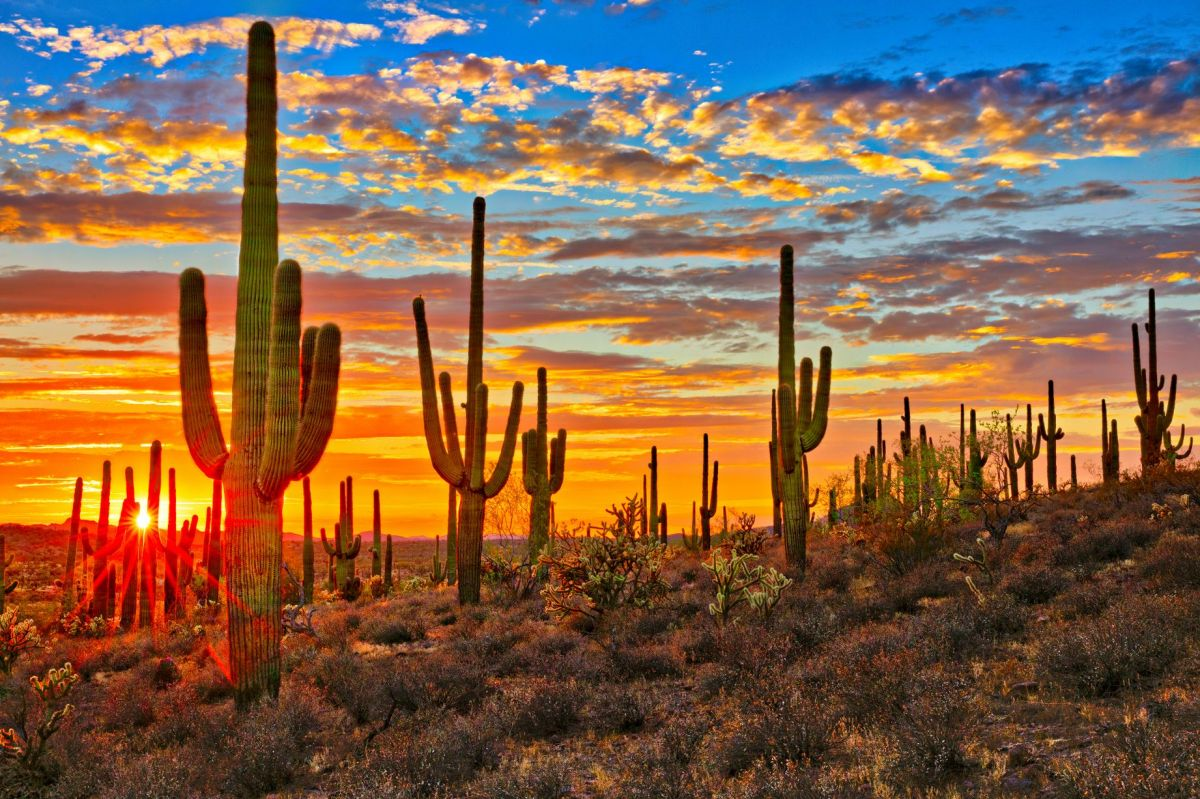 Secrets of our Sonoran Desert